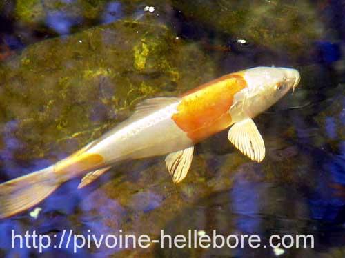 Le bassin for Jardiland bassin poisson